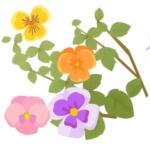 植物成分主体の美白化粧品ランキング